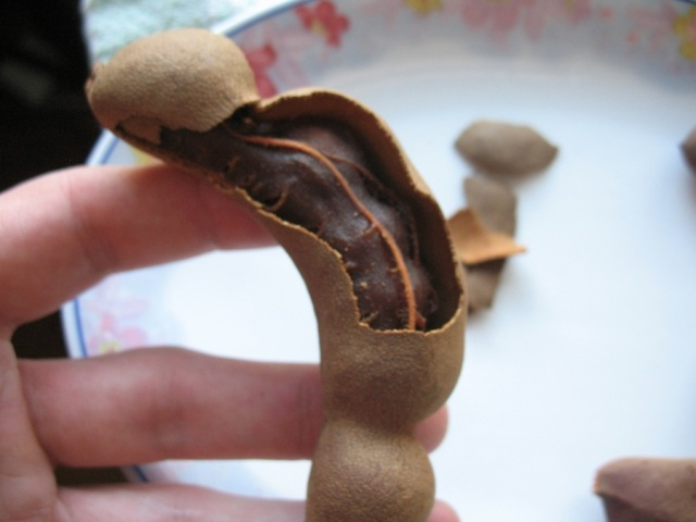 Cracking open a sweet tamarind pod