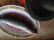 Japanese mackerel for grilling