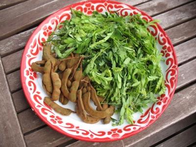 tamarind leaves aids in arthritis relief